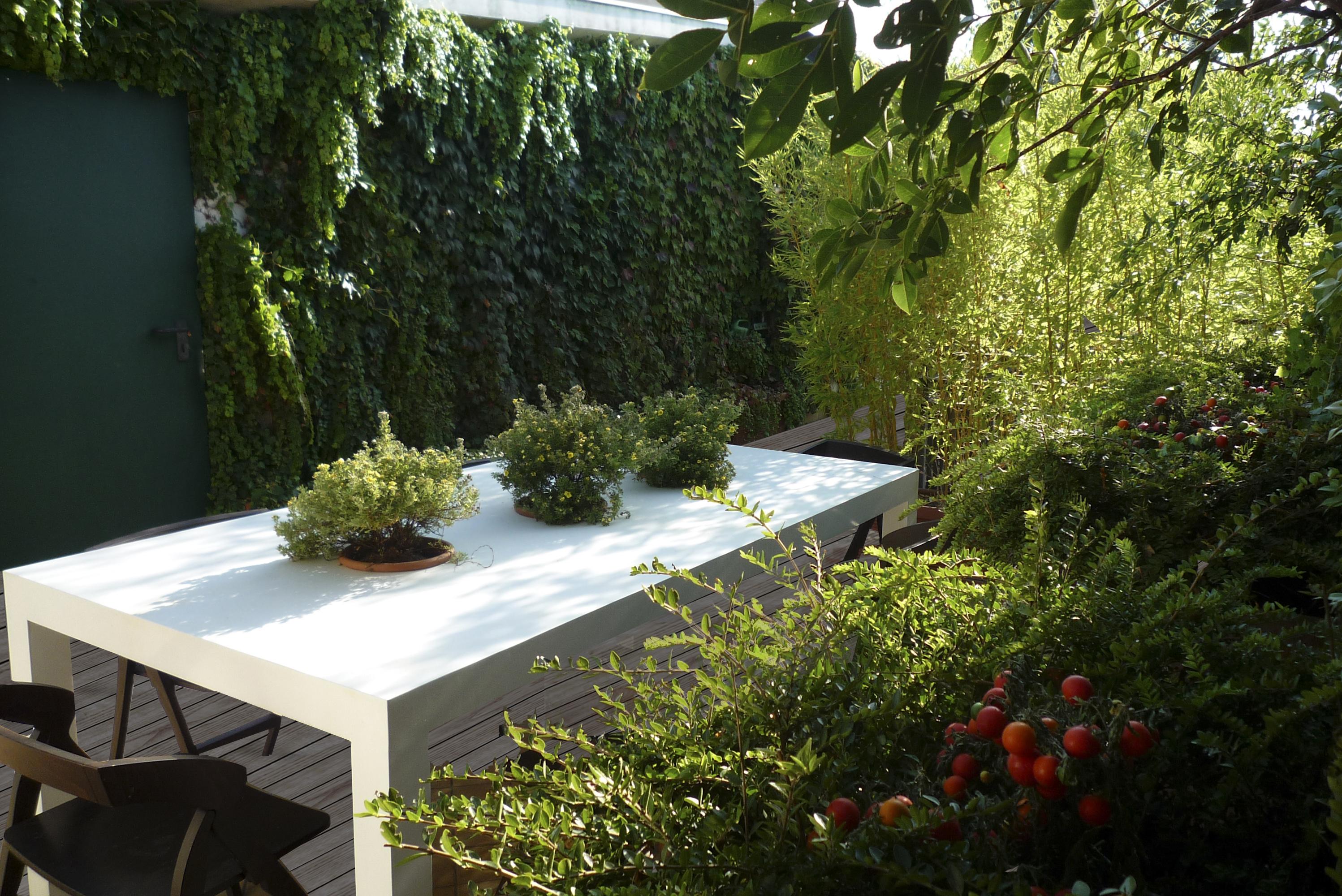kletterpflanzen auf balkon und terrassen – sichtschutz und, Gartengerate ideen